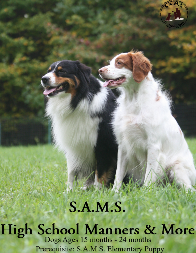 S.A.M.S. Canine Highschool Manners & More