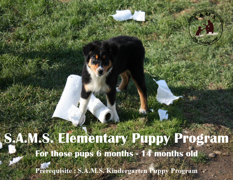 S.A.M.S. Elementary Puppy Program